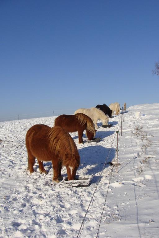 repas en hiver