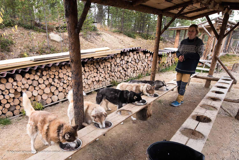 Fressen - jeder Hund hat seinen Platz