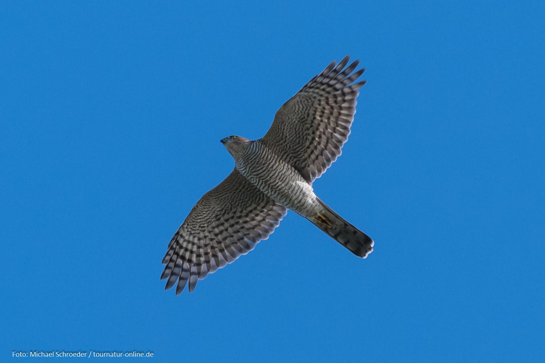 Falsterbo - Ornithologen unter sich