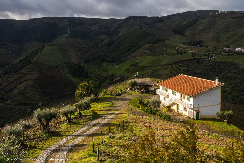 Weinbauregion Alto Duoro und Parque Arqueológico do Vale do Côa