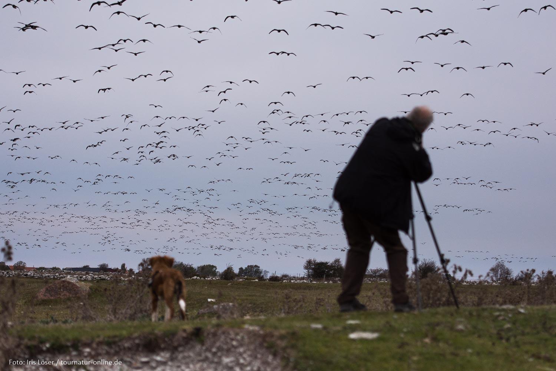 Der Süden Ölands - Paradies für Ornithologen