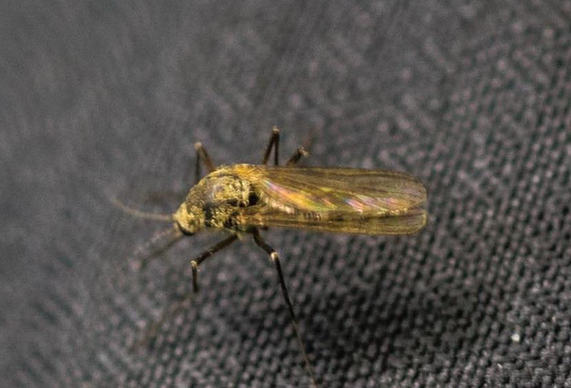 Mücken und andere Plagegeister im Wohnmobil
