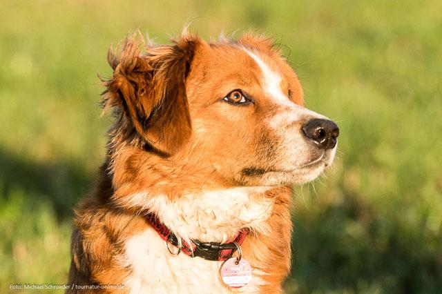 Adi als Junghund (5.- 7.  Monat)