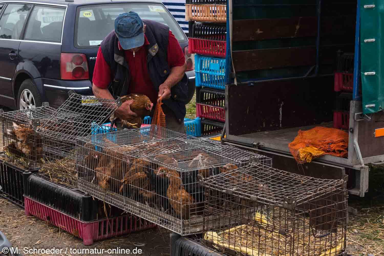 Lebende Hühner auf dem Markt von Sokoly