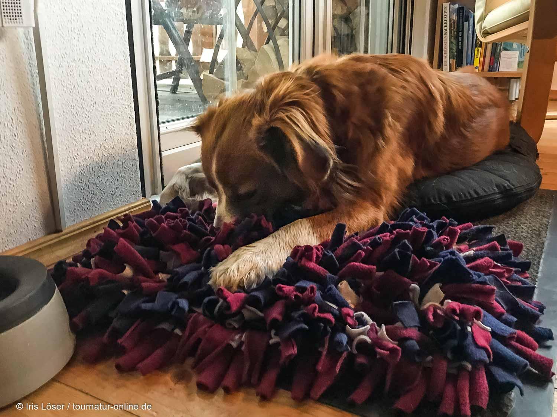 Schnüffelteppich - Nasentraining für Hunde