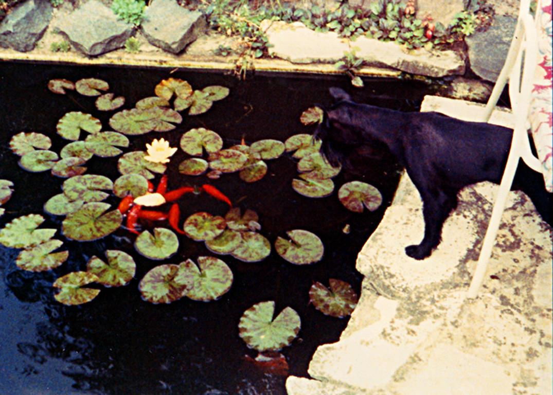 Wazlav zählt Fische bei Familie König in ihrem ersten Teich