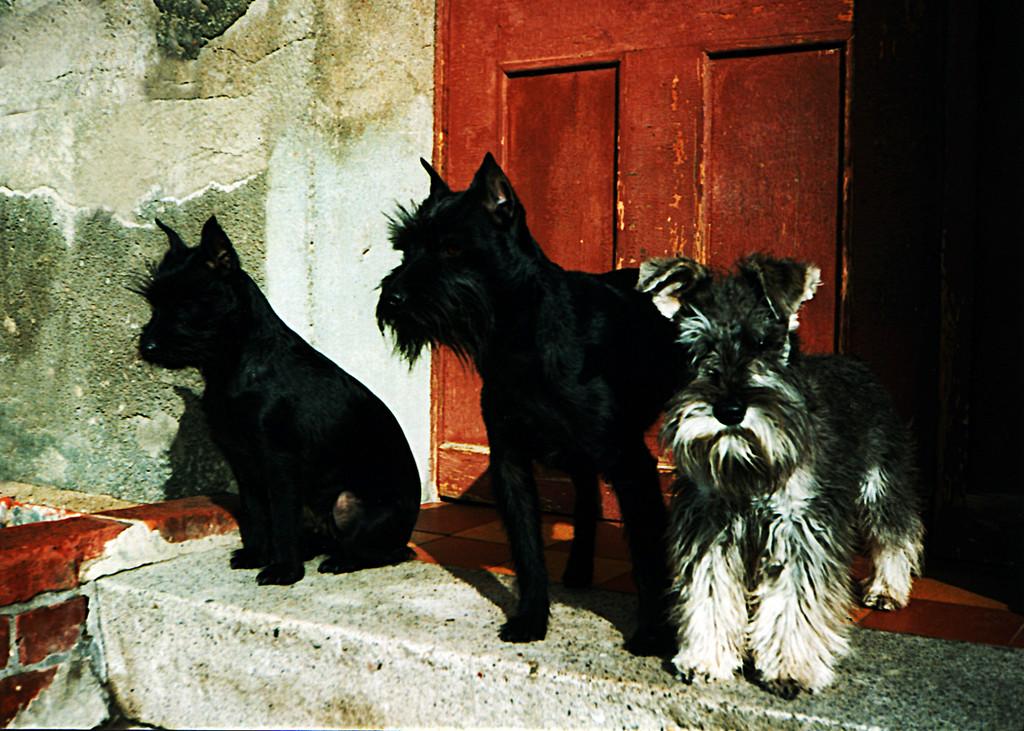 Püppi, Wazlav & Micki