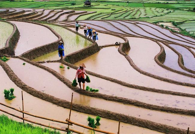 2015. RIZIERES à MU CANG CHAY, VIETNAM