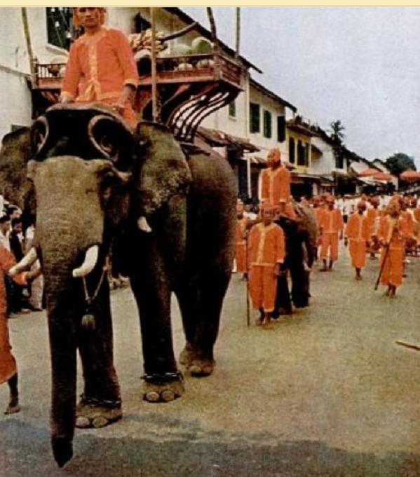 10 AOÛT1959. MARIAGE DE S.A.R LA PRINCESSE DALA SAVANG. PARADE DES ELEPHANTS . REPORTAGE LIFE.