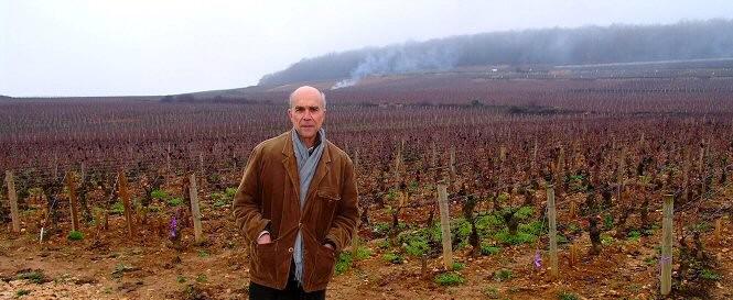 AUBERT DEVANT CORTON CLOS DU ROI, REMIS EN FERMAGE EN 2008 à ROMANEE-CONTI PAR LES PRINCES DE MERODE
