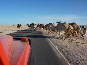 Reiseeindrücke aus der Westsahara