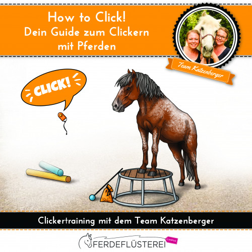 Clickertraining mit Pferden! So funktioniert das Training mit positiver Verstärkung für Dich und Dein Pferd.