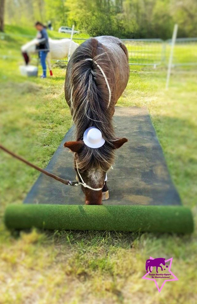Zirkustrick: Pony rollt den Teppich aus