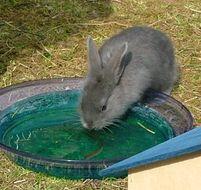 Kaninchenfamilie im Sommer