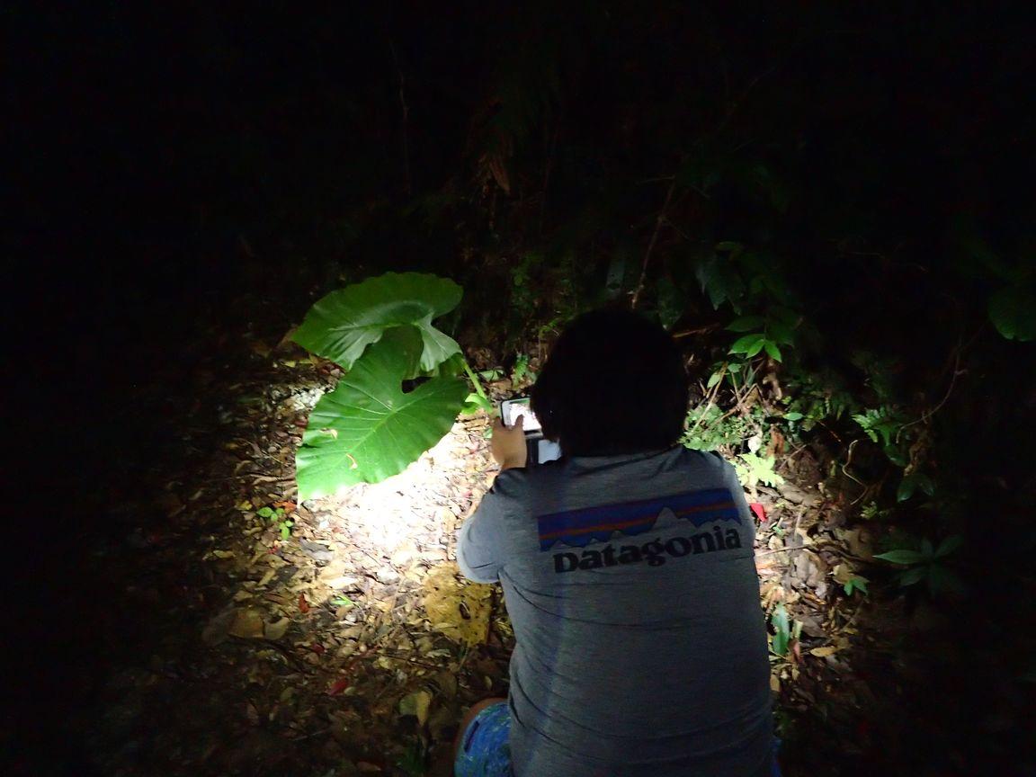 9月19日②、夜の名護は生き物の宝庫!