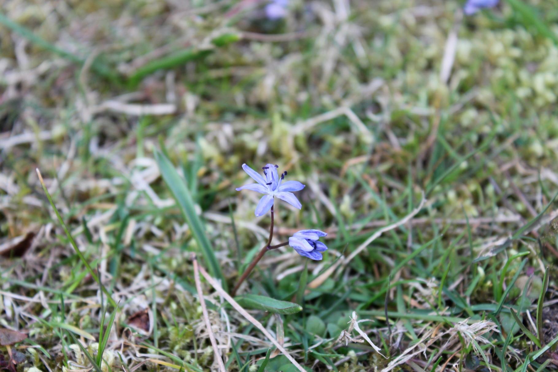 au jardin, mars 2014