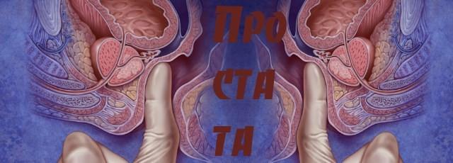 Простата –  второе сердце мужчины