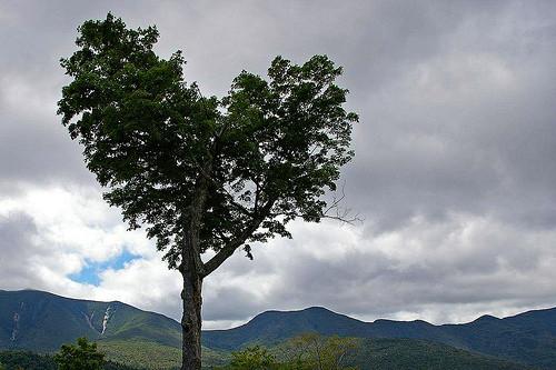 Baum wie ein Herz in Vermont