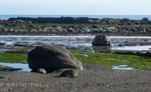 Weisskopfseeadler ganz hinten auf den Fels