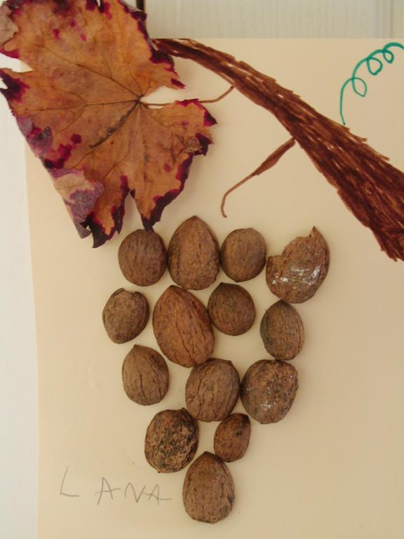 grappe de raisins en coquille de noix
