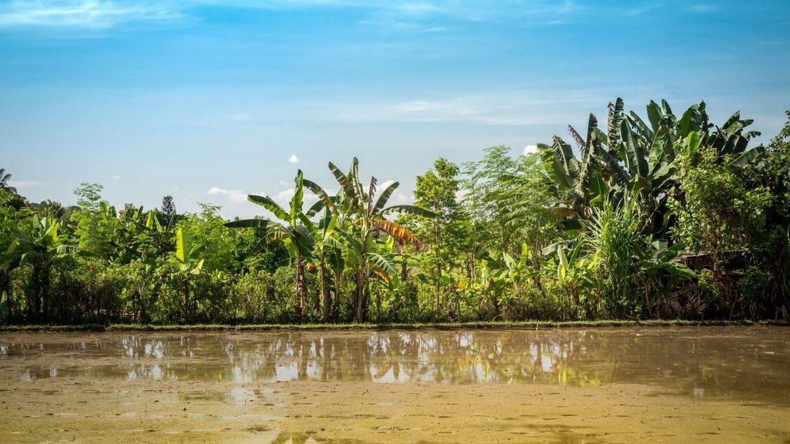 Fluss in Bali