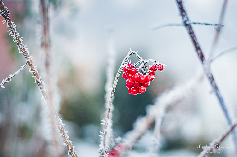 Чарівний зимовий сад