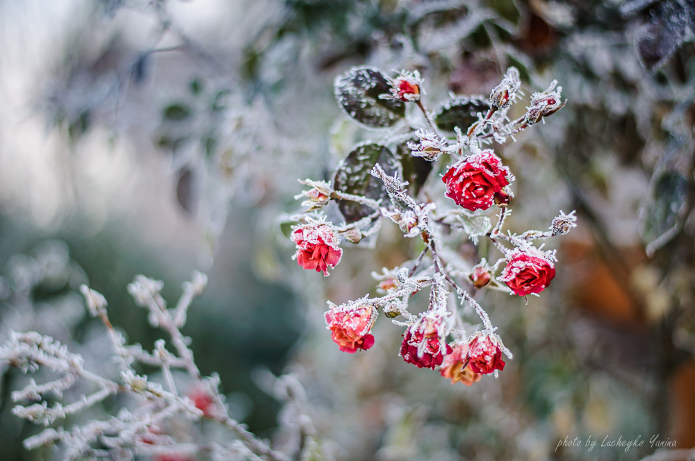 Морозний ранок у Верховині