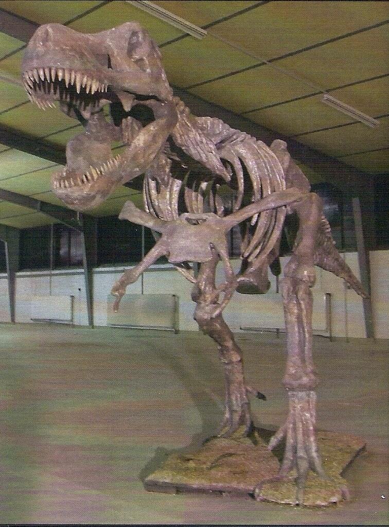 Dinosaur skeleton T-Rex