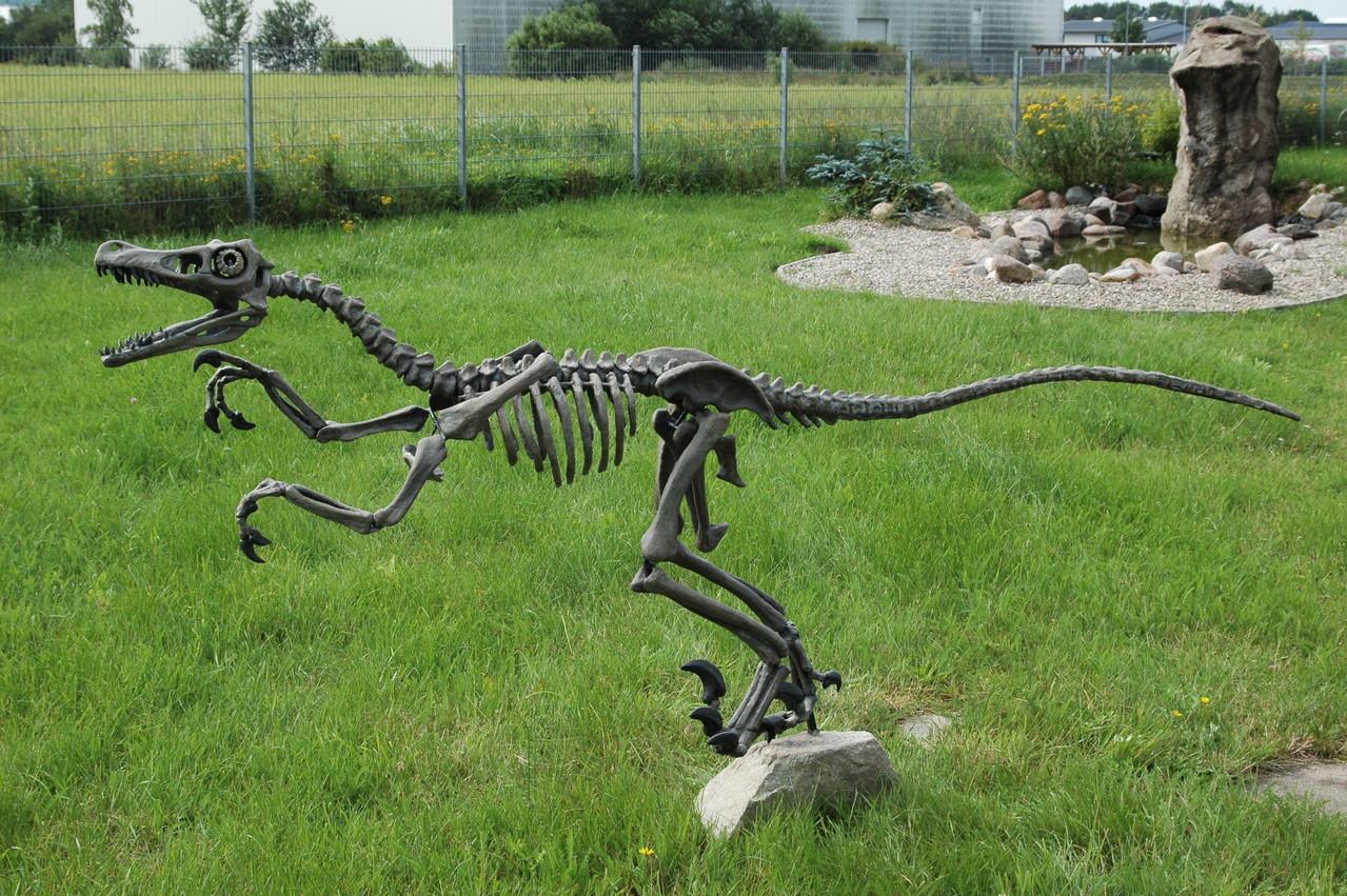 Raptor Skelett als Mietobjekt