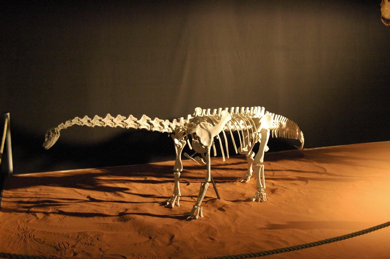 Spinophorosaurus im Maßstab 1:10