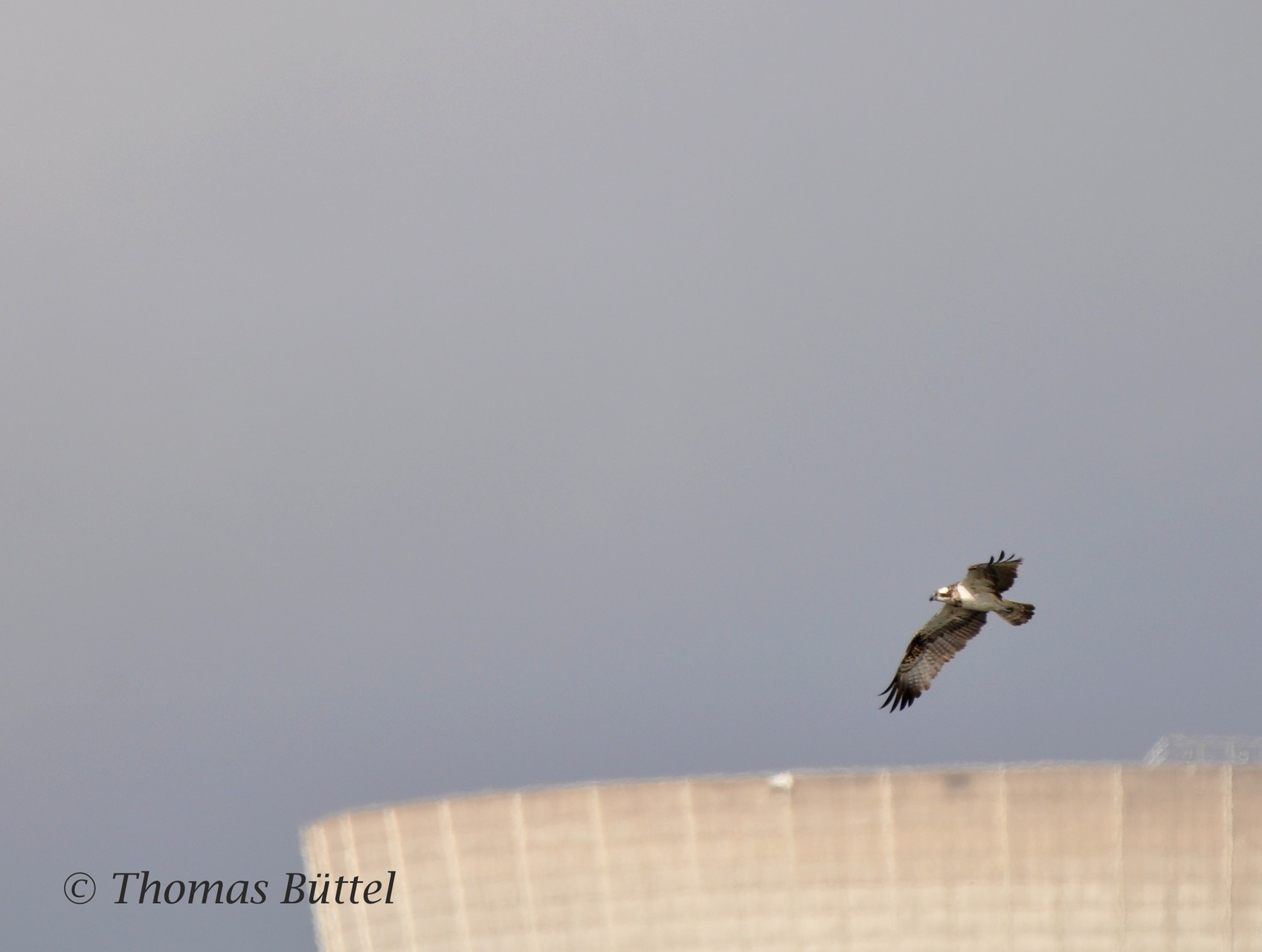 """Osprey in front of the former nuclear power station """"Grafenrheinfeld"""""""