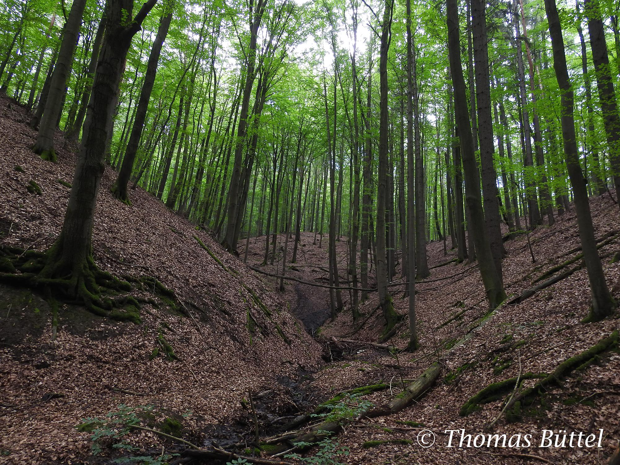 "forest at the ""Schlangenweg"""