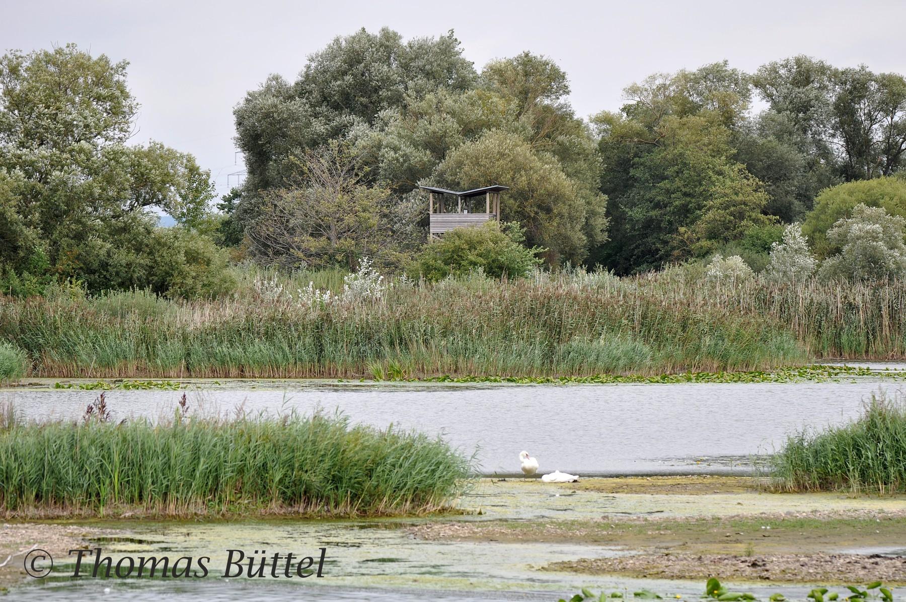 Beobachtungsturm an den Garstädter Seen