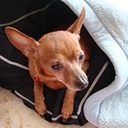 HSAホームドッグソーパー検定オーガニックの犬のシャンプー
