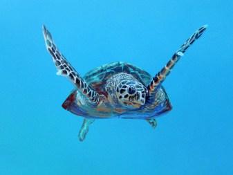 Eine Karettschildkröte scheint in dieser Malerei direkt auf den Patienten zu zuschwimmen. Die Wandmalerei in der Arztpraxis wurde speziell für Kinder und Jugendliche konzipiert.