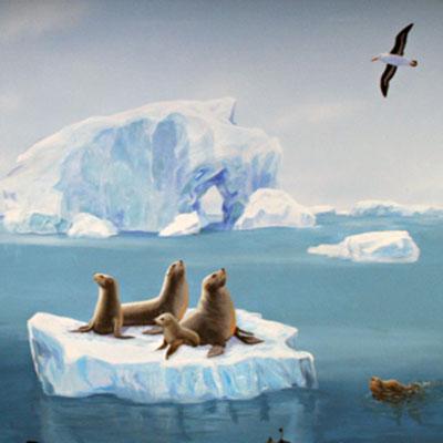Detailansicht Robben auf Eisscholle