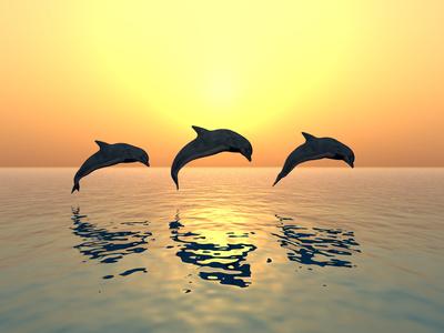 Drei springende Delfine - Fotolia lizensiert