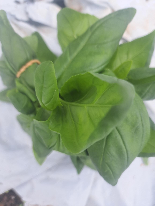 légumes cultivés avec amour.