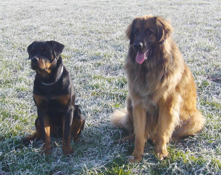Victoria mit Freund Brutus