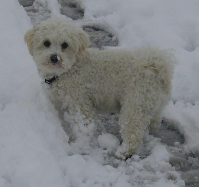 Auch Sam kämpft mit den Schneemassen - hat aber viel Spass dabei