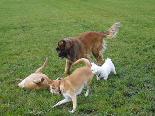Spiel und Spass mit Freunden