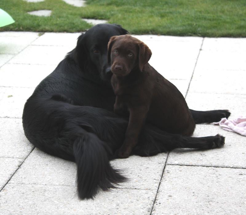 Enya mit Freund Balou