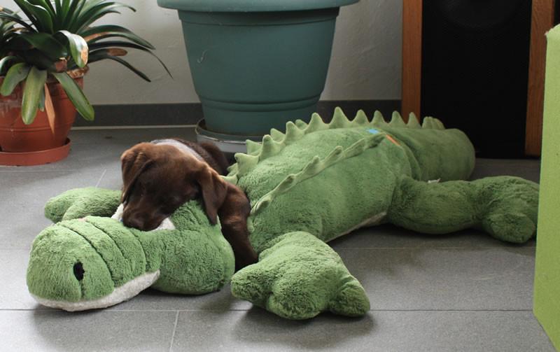 Enya und ihr plüschiger Freund Pascal, das Krokodil