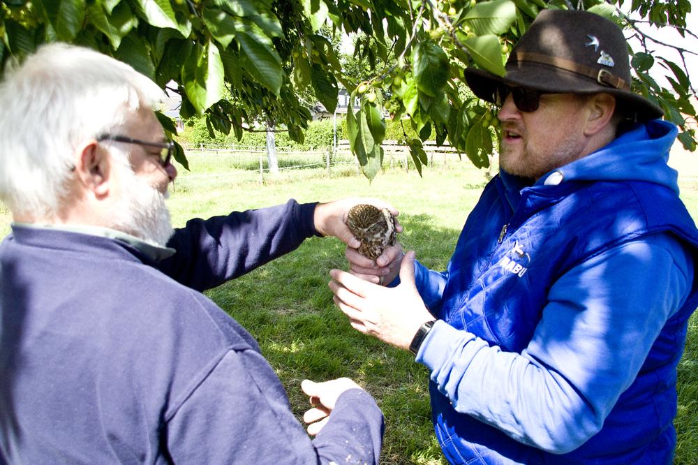 Übergabe eines aldulten Steinkauzweibchen an Uwe Wedegärtner