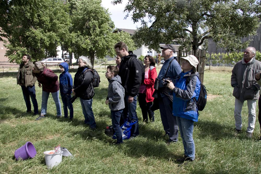 Der erste Brutplatz wird von Peter Josef Müller und den Teilnehmer auf einer Wiese  aufgesucht