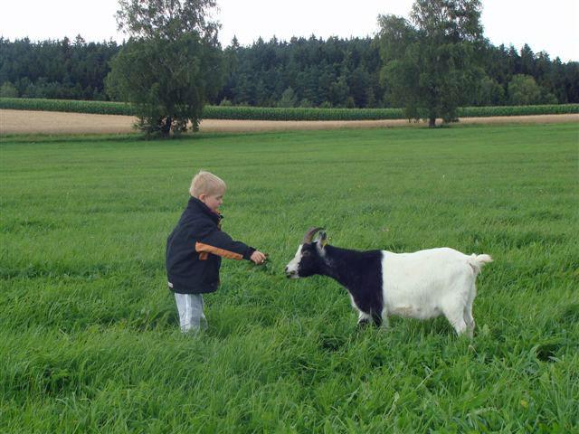Auf die Kinder warten Ziegen, Kühe, Katzen