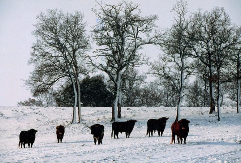 Frío e Invierno