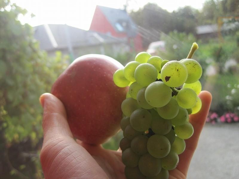 りんごもお庭にあります。あまずっぱくてレッカ(おいしい)!