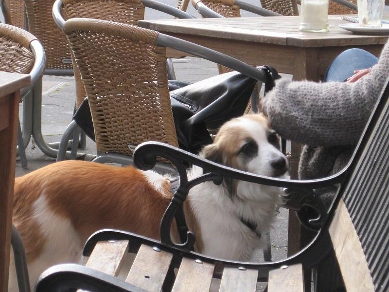 犬がノンリードでよく歩いています。
