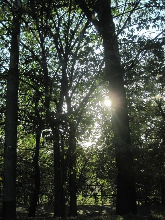 木漏れ日しゅーん。